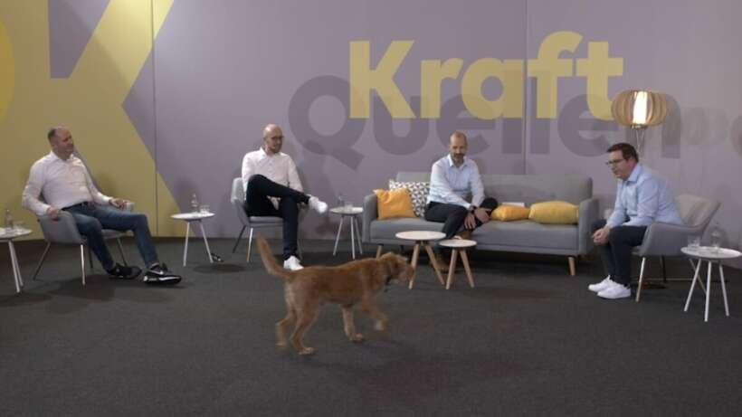 Webinar-EWE-Kraftquellen-Hund-Quinty.jpg
